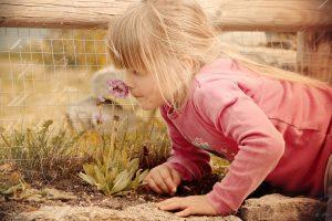 Igual que las flores desprenden un olor, también nosotros tenemos un olor corporal determinado que a veces atrae a los piojos